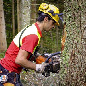Forstarbeit Laubichler Österreich