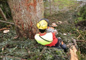 Baumfällung Österreich - Forstunternehmer Laubichler Österreich