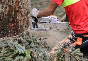 Baumfällung, Problembaumfällung, Baumabtragung Laubichler Forstservice