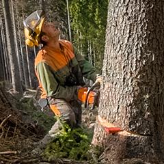 Dorel Buhai - Waldarbeiter bei Laubichler Holz