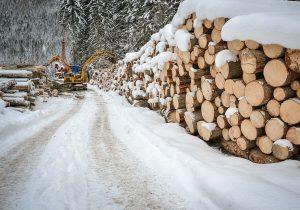 Baumfällung, Holzseilung im Winter - Holzernte Laubichler