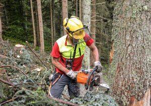 Holzarbeit und Forstpflege in Salzburg