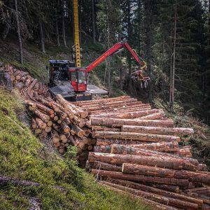 Starkholzbringung, Schadholzbringung und Durchforstung Österreich