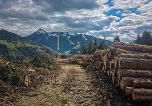 Holzbringung im Steilhang