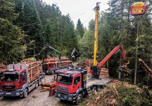 Forstbetrieb Laubichler Österreich - Holzernte, Holzseilung, Holztransport