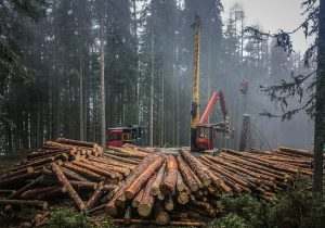 Forsttechnik Laubichler Holz Österreich
