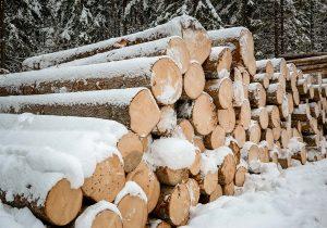 Rundholz Ausformung bei Schneefall