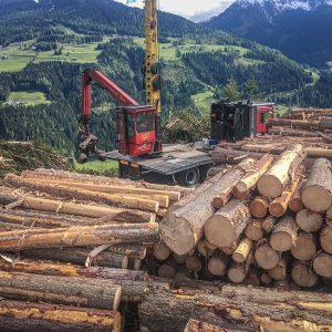 Holzernte Laubichler in der Steiermark