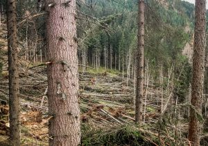 Schadholzaufarbeitung Österreich