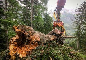 Brennholzbringung mit Seilkran