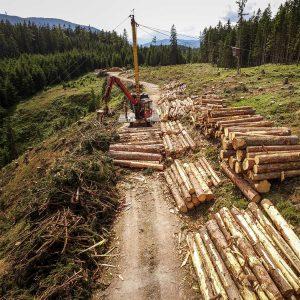 Holzschlägerung, Seilkranbringung - Forstbetrieb Laubichler